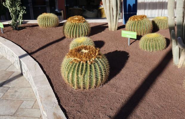 фото Labranda Riviera Marina (ex. Riviera Marina Resorts) изображение №58