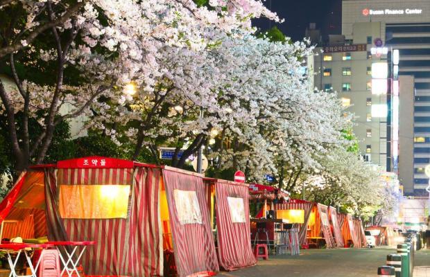 фотографии Lotte Busan изображение №88
