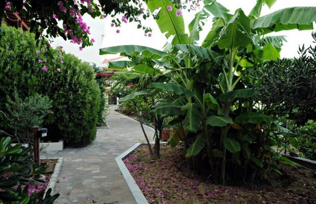 фотографии отеля Athena Hotel изображение №19