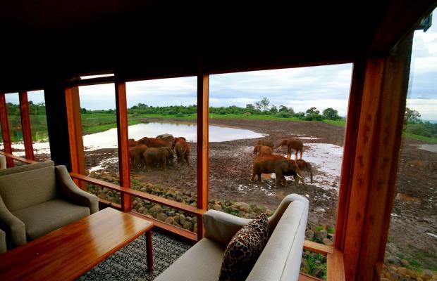 фотографии отеля The Ark изображение №7