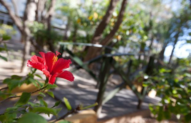 фото отеля Playa Senator Playasol Spa Hotel изображение №41