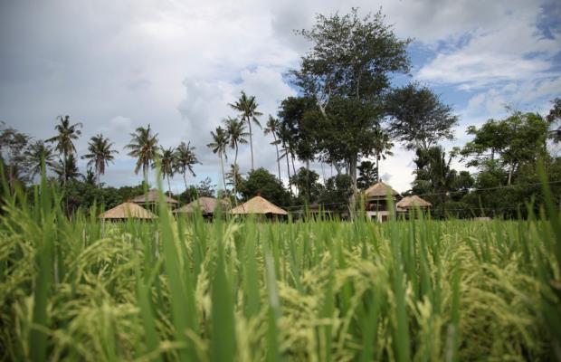 фотографии Villa Tamu Seseh изображение №24