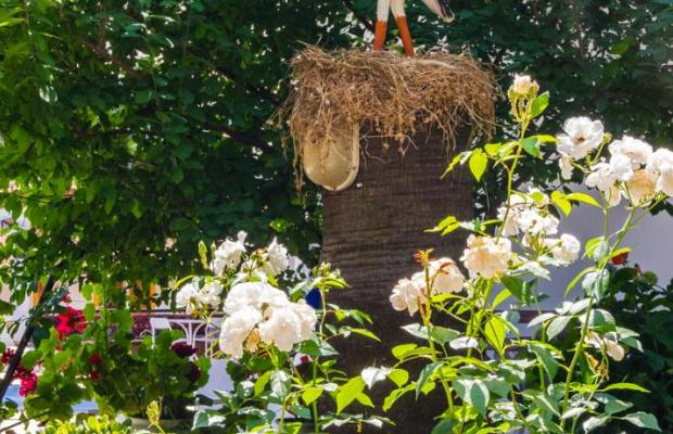 фото Naturella изображение №6