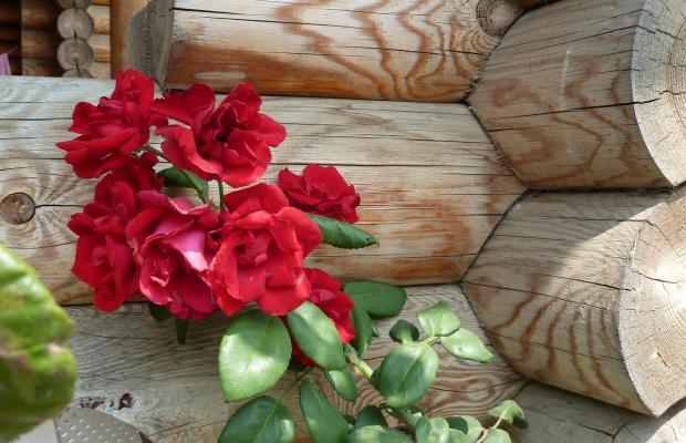 фото Экодом Белые росы (Ekodom Belye Rosy) изображение №2