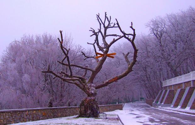 фото Горный Воздух (Gornyj Vozduh) изображение №2