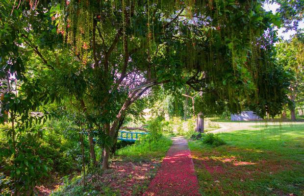 фотографии отеля Country Lake Nature Lodge изображение №3
