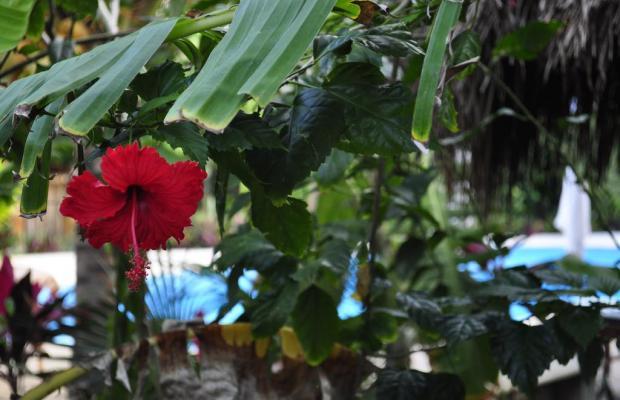 фото отеля Green Tulum изображение №13