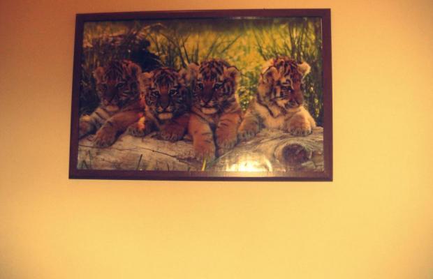 фото Tiger изображение №30