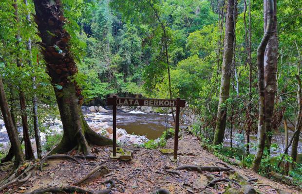фотографии Mutiara Taman Negara Resort изображение №16