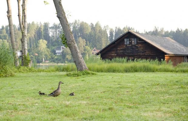 фотографии Inselhotel Faakersee изображение №24