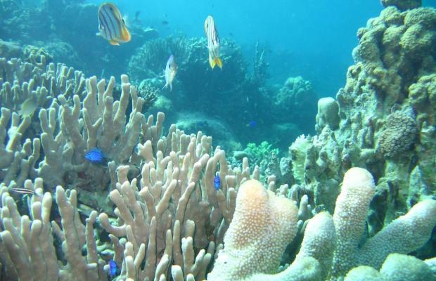 фотографии Coral Bay Beach and Dive Resort изображение №20