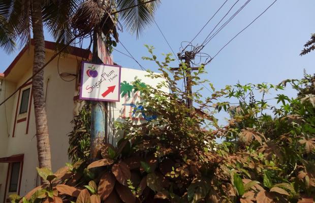 фото Sugar Plum Baga (ex. Macedo Palms Lemonmint) изображение №2